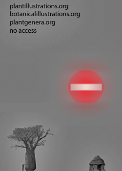 no HD illustration available