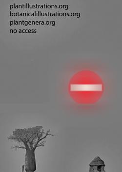 no thumbnail 200px available